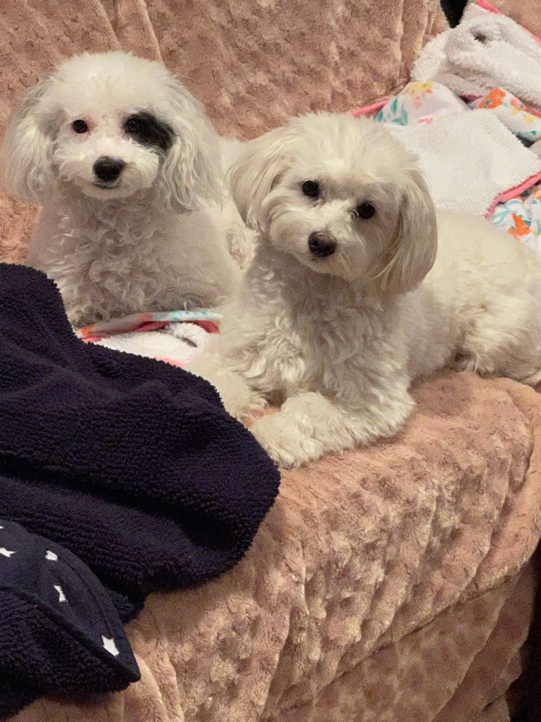 photo of Gina M.'s dogs