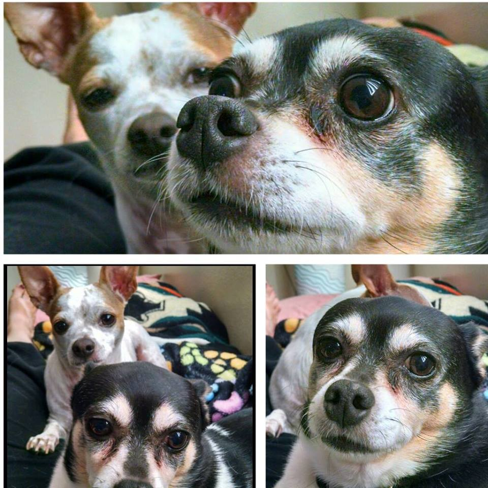 photos of Dawn M.'s dogs