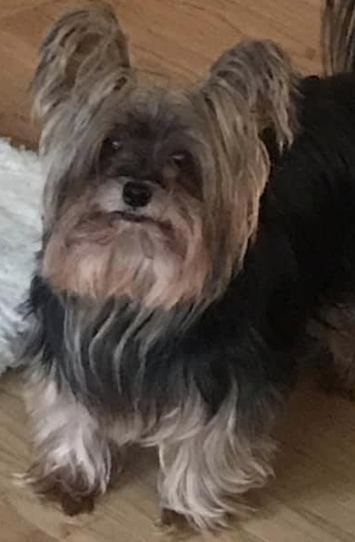 photo of Gail D.'s dog